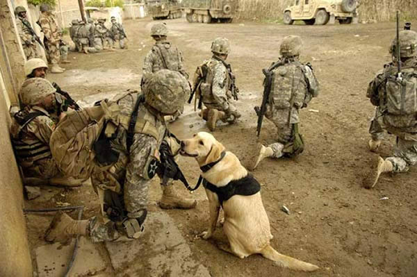Animaux soldats Armee_chien_02