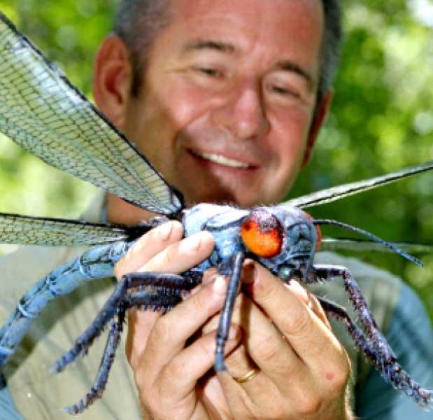 taille des insectes Meganeurid_bbc