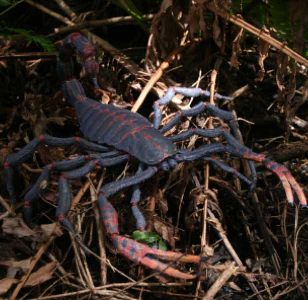 taille des insectes Scorpion_bbc