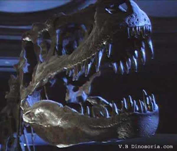 72% des pasteurs américains seraient créationnistes  Albertosaurus_06