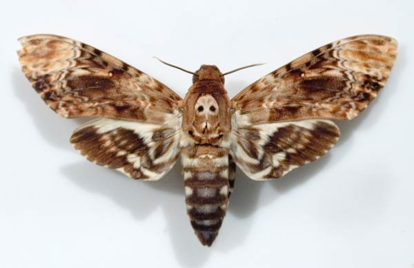 Suite d'image Papillon-49