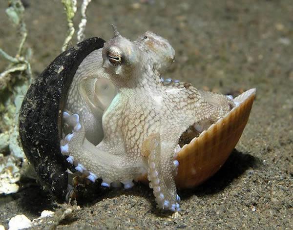 PEINTURE : peindre une pieuvre  Pieuvre-22