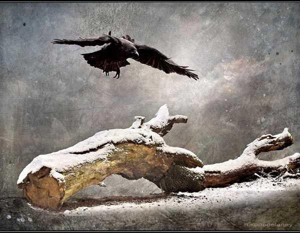Le drapeau noir Corbeau-6