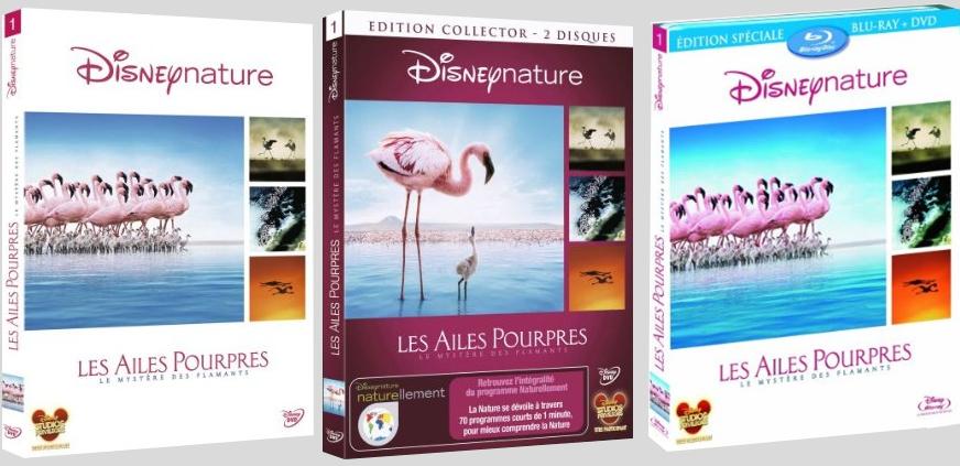 [BD + DVD] Les Ailes Pourpres, le mystère des flamants (4 Juin 2010) - Page 2 Lesailespourpresfr