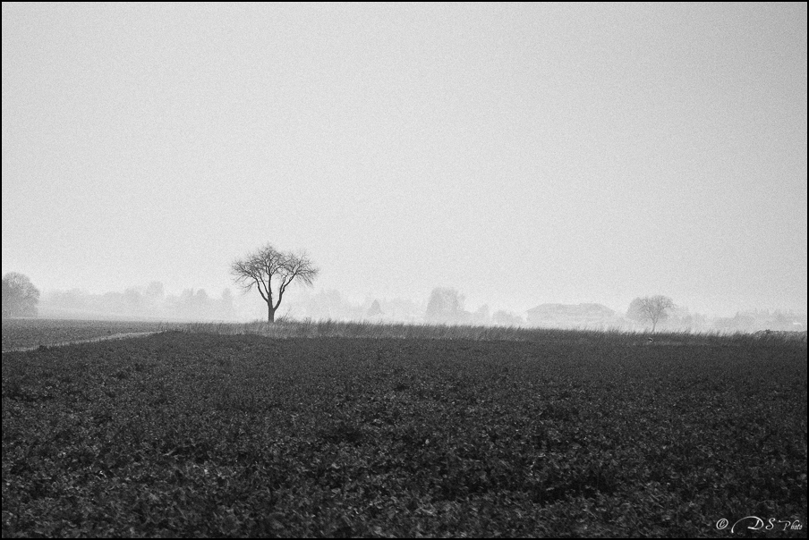 Sortir du brouillard... 20150322102705-26f28cf2