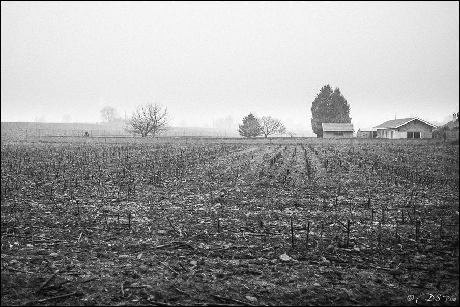 Sortir du brouillard... 20150322102709-e42166d3