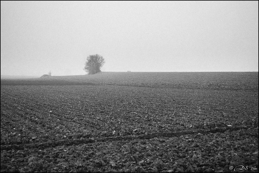 Sortir du brouillard... 20150322102714-898c05c5
