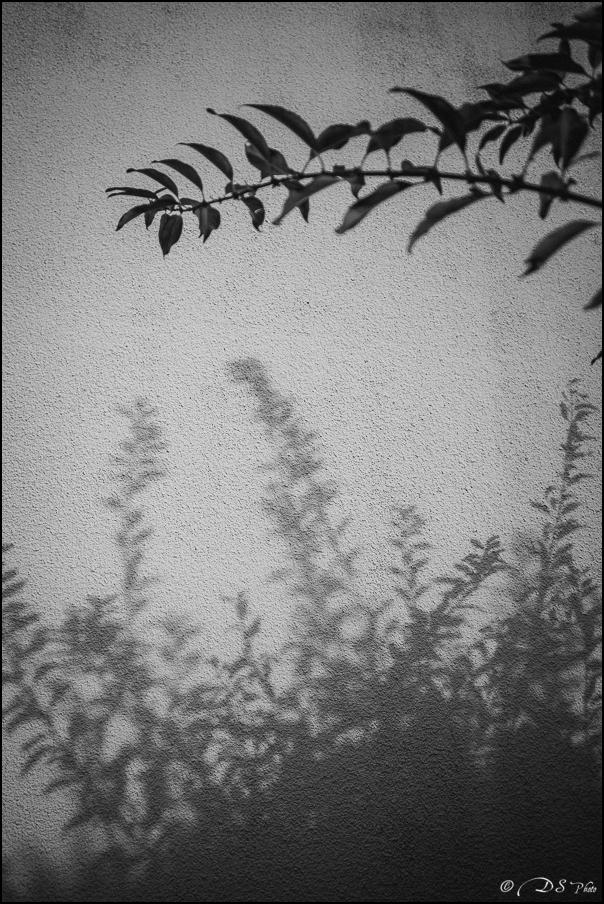 Feuilles d'ombre et de lumière 20151209143411-69276465