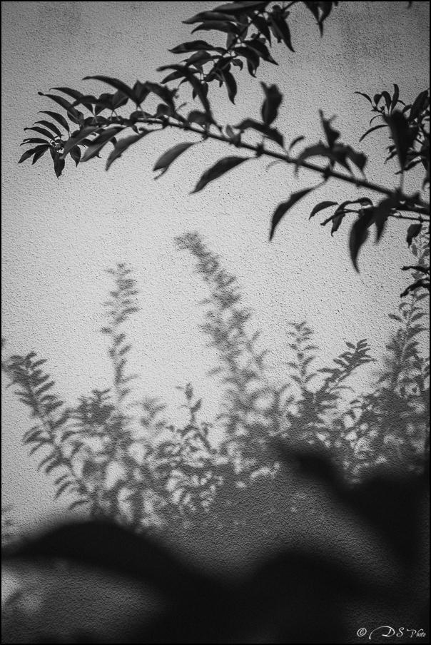 Feuilles d'ombre et de lumière 20151209143413-662ef19c
