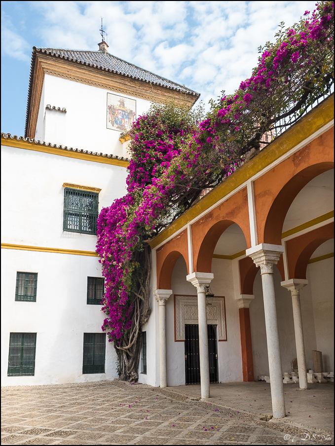 [Le Don Andalou] Road-Trip Etape 5 : Séville (Part 5) 20180806111631-73c78dd3