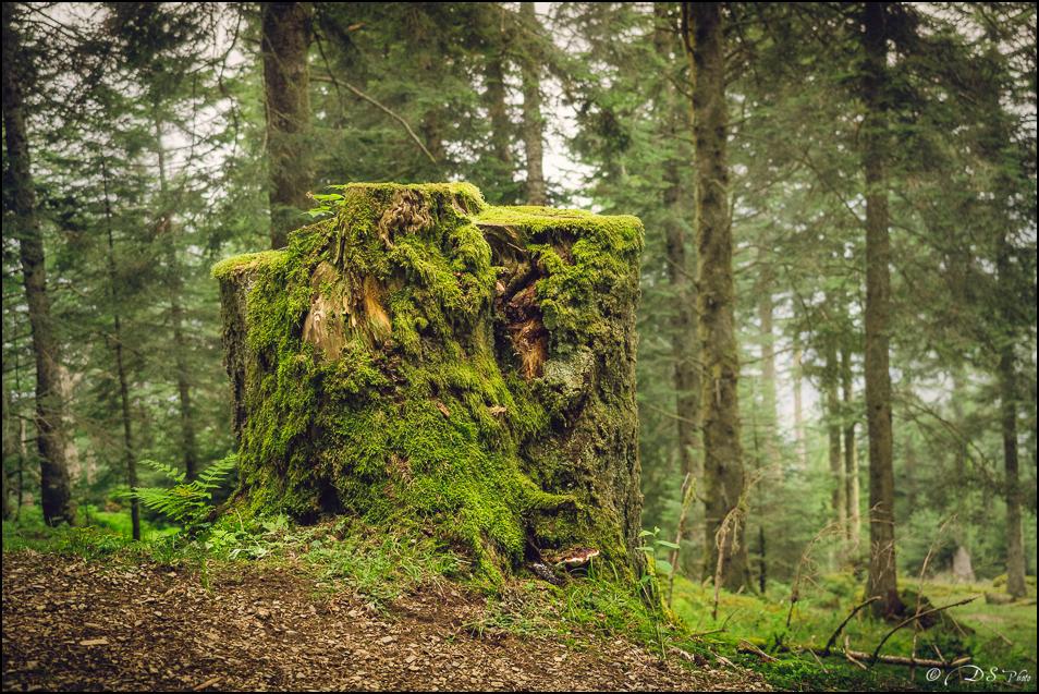 Promenons-nous dans les bois... 20190922154235-fa94bc9d