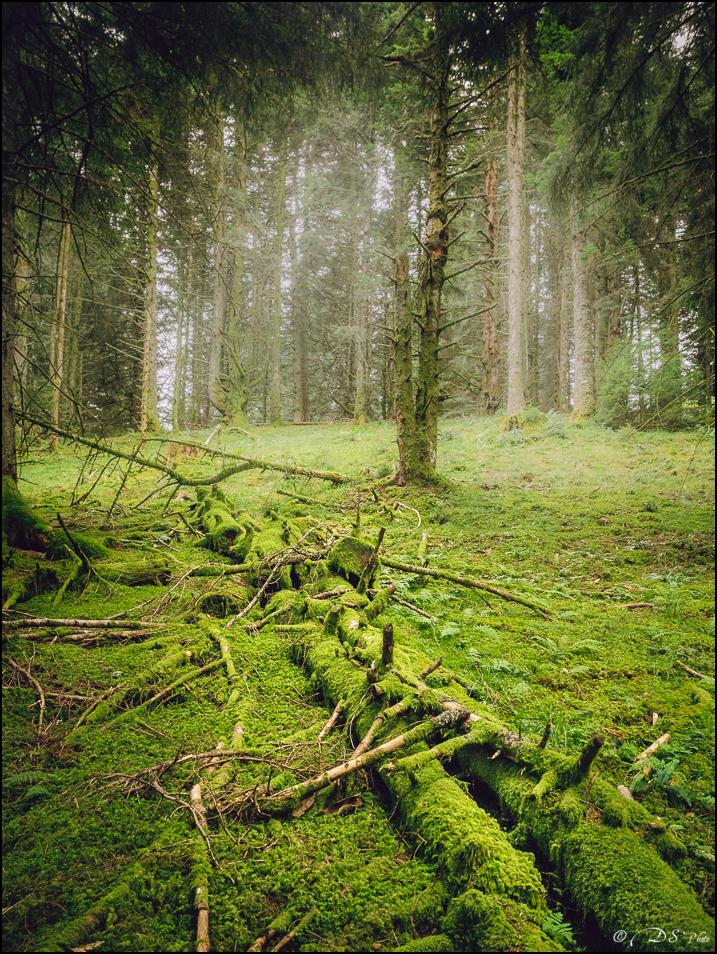 Promenons-nous dans les bois... 20190922154254-11a47a19