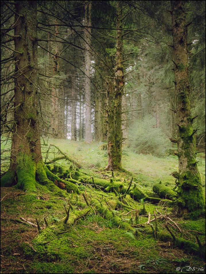Promenons-nous dans les bois... 20190922154304-c7a0db83