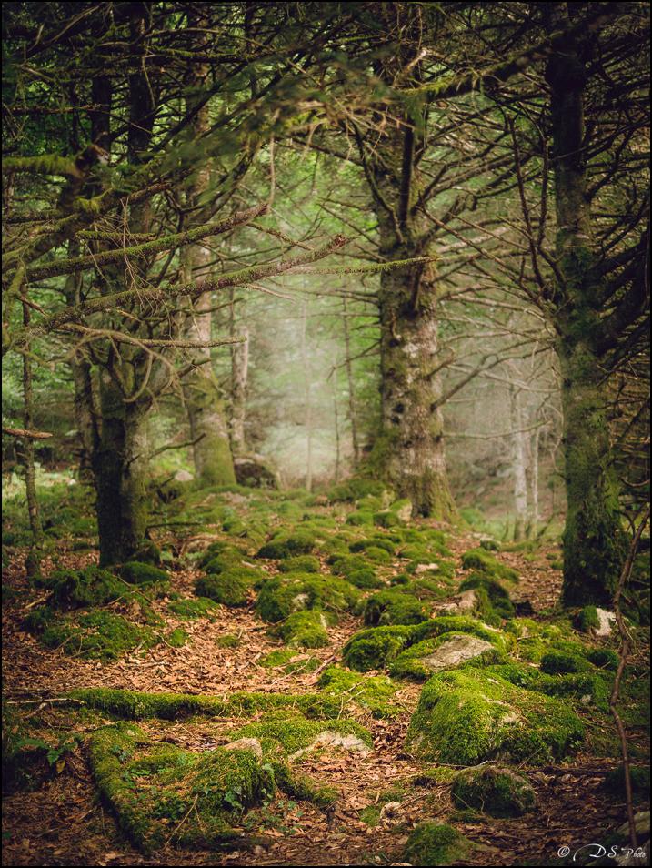 Promenons-nous dans les bois... 20190922154324-be6b70f7
