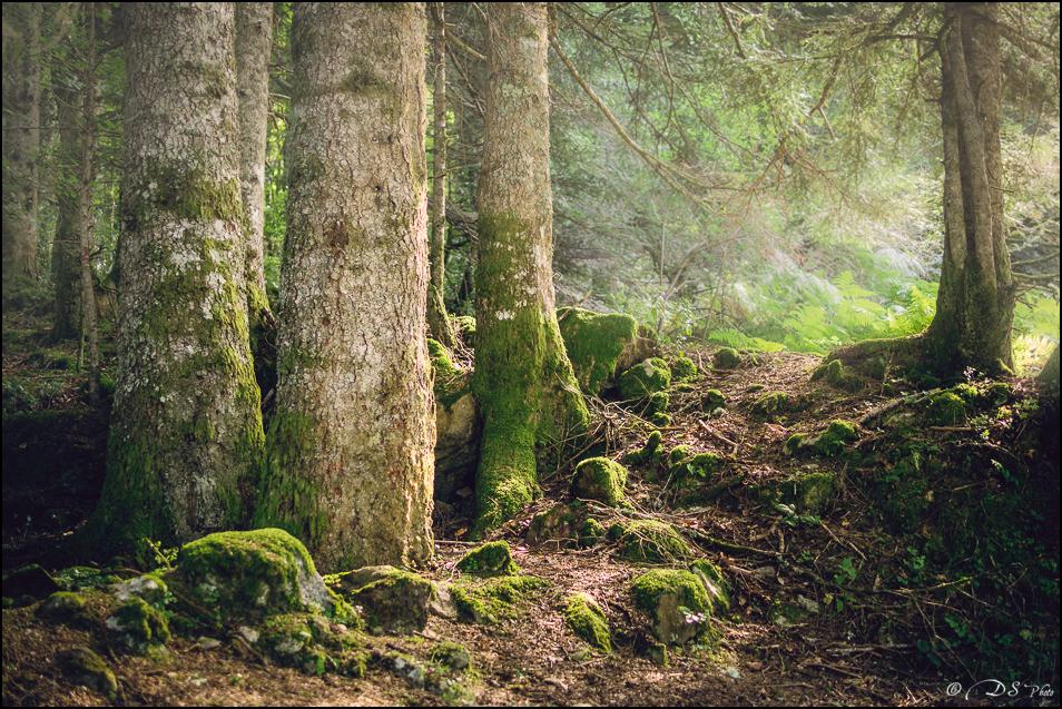 Promenons-nous dans les bois... 20190922154452-a0778b2e