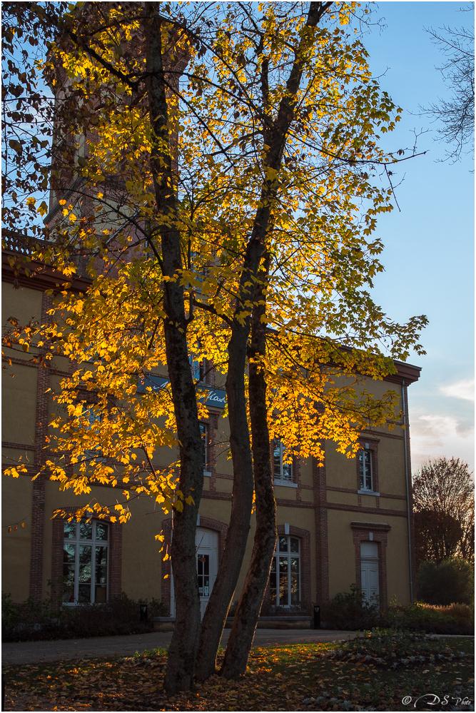 Le Jardin Massey dans sa lumière automnale. 20201201093020-26161e09