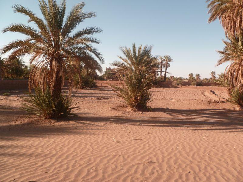 [Maroc Camp/Dernières nouvelles] Mon nouveau camping à Mhamid Esprit Désert P1010564_1