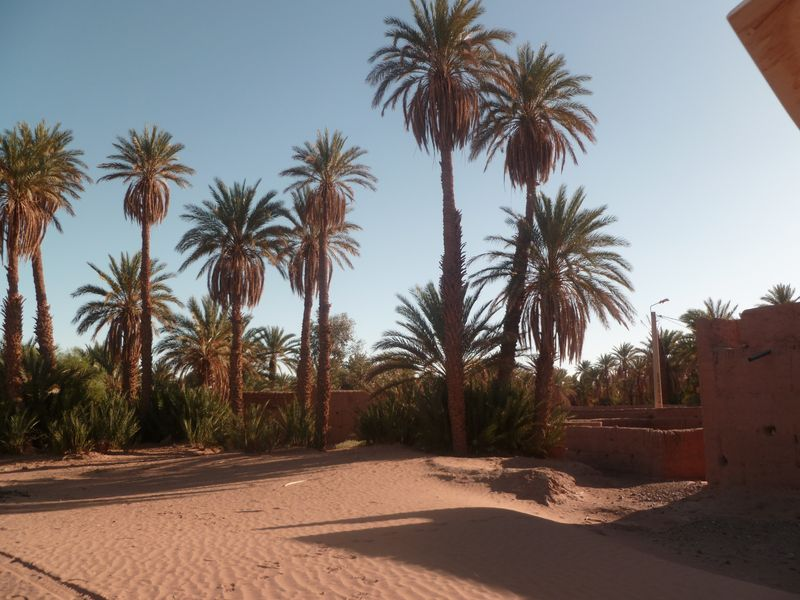 [Maroc Camp/Dernières nouvelles] Mon nouveau camping à Mhamid Esprit Désert P1010565_1