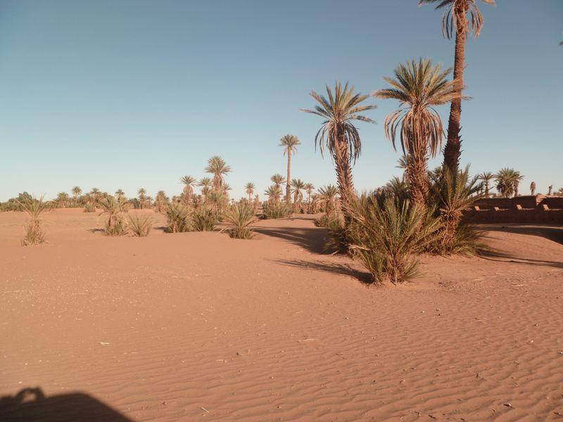 [Maroc Camp/Dernières nouvelles] Mon nouveau camping à Mhamid Esprit Désert P1010567_1