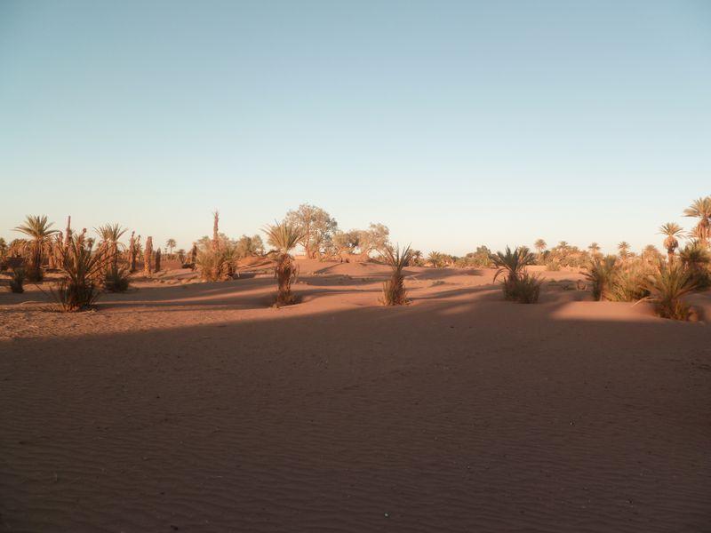 [Maroc Camp/Dernières nouvelles] Mon nouveau camping à Mhamid Esprit Désert P1010585_1