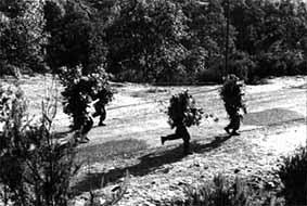 La Guerre d'Algérie en images Aln23