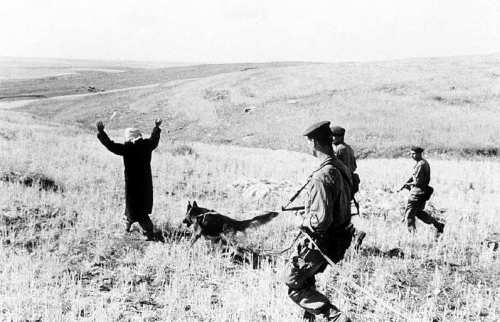 La Guerre d'Algérie en images Operation-chien