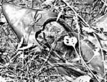 ONTARIO DOE: WM, 20-50 - Skeletal remains found in Markham, Ontario - July 16, 1980 - Possibly Transgender 1084UMON