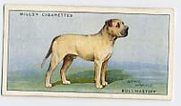 Как выглядели первые бульмастифы Bull-mastiff