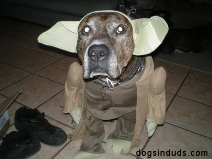 L'univers des Geeks - Page 4 Yoda%20dog%20costume
