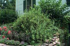 Žive ograde Ziva-ograda
