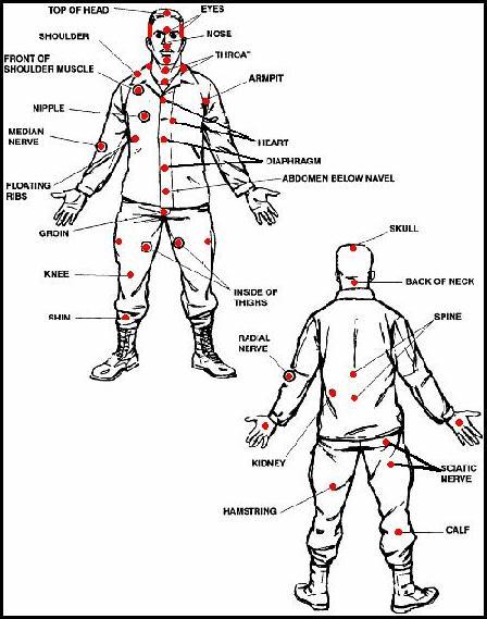 Анатомија и физиологија на човековото тело Koppoanatomy