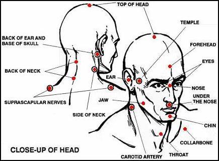 Анатомија и физиологија на човековото тело Koppohead