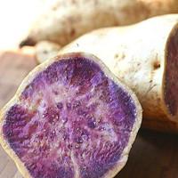 The Okinawan Sweet Potato: The Purple Powerhouse of Nutrition & treats Diabetes Okinawan