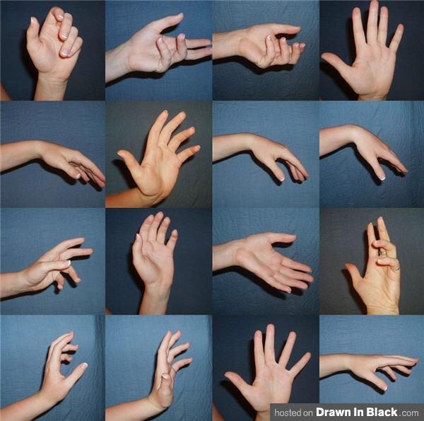 Sala de estudos de Anatomia- Mãos WindsweptSummer-Left-Hand-Reference