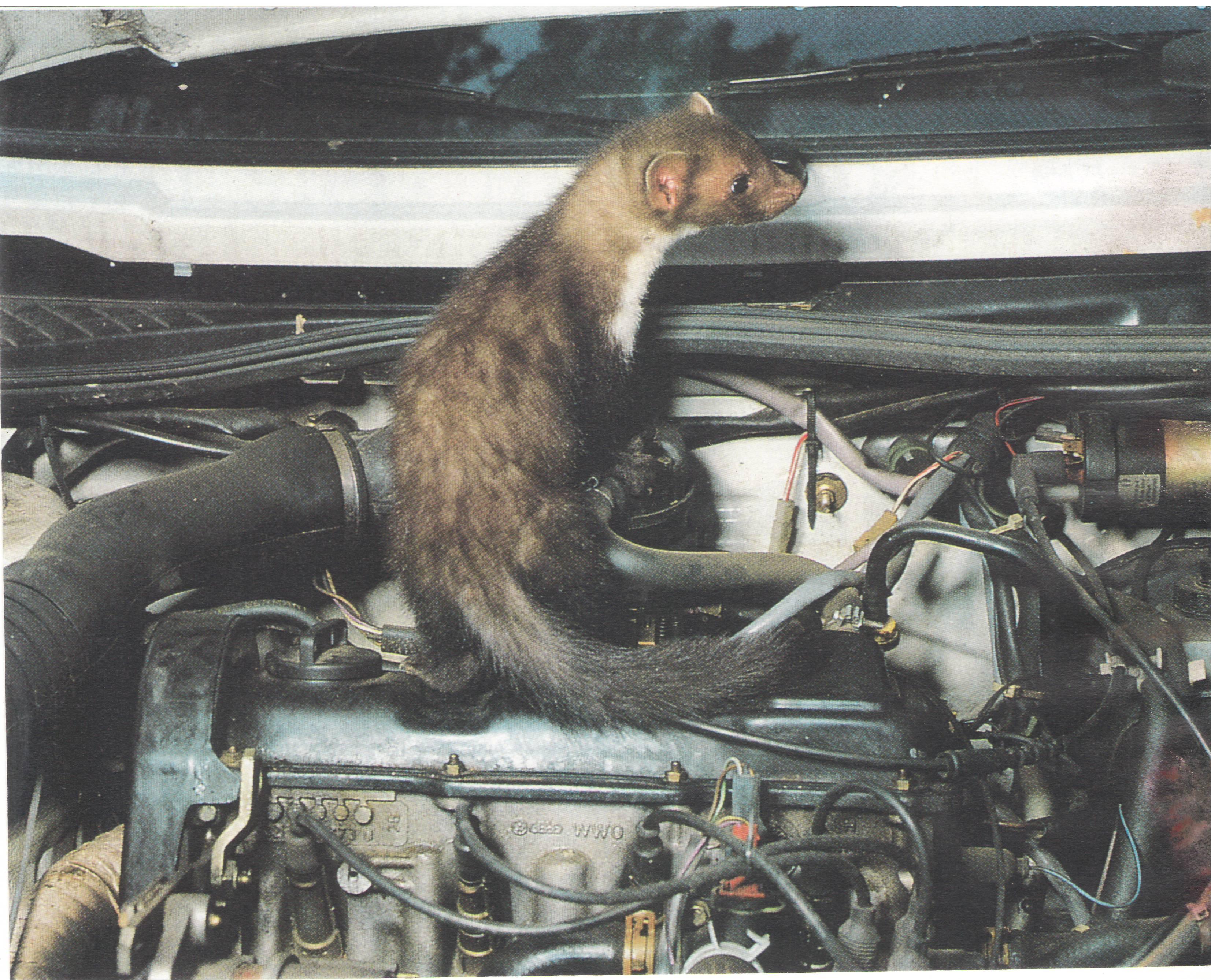 voyant d'huile allumer au ralenti sur Voyager 1998 moteur diesel à pignons Fouine%20dans%20Moteur