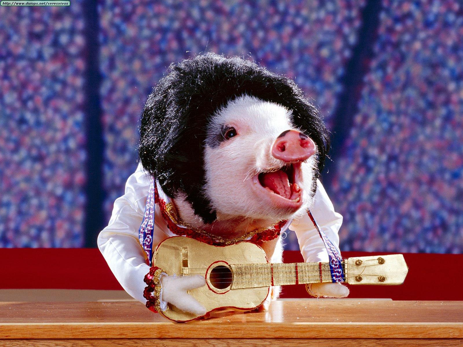 NEW YORK NEW YORK  Animals%20Pigs%20On%20Parade_Elvis%20Pigsley