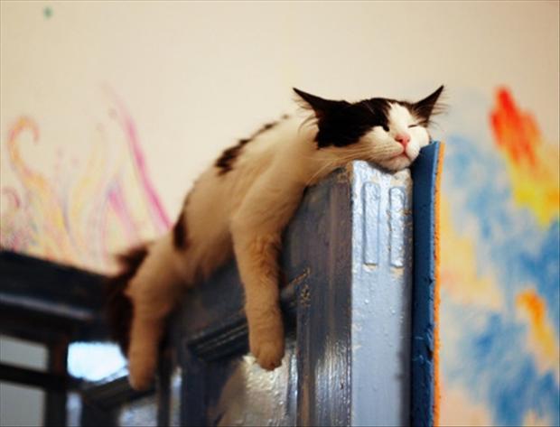 Con que animal te indentificas? Lazy-cats-funny