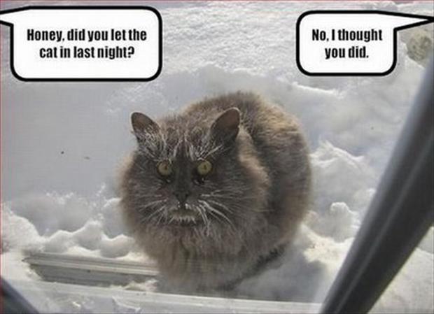 Smiješne slike - Page 5 Funny-cats-25