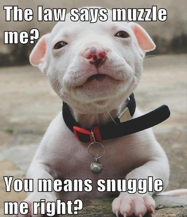 Réglementation sur les chiens catégorisés - Page 3 Cute-dogs-funny-pictures