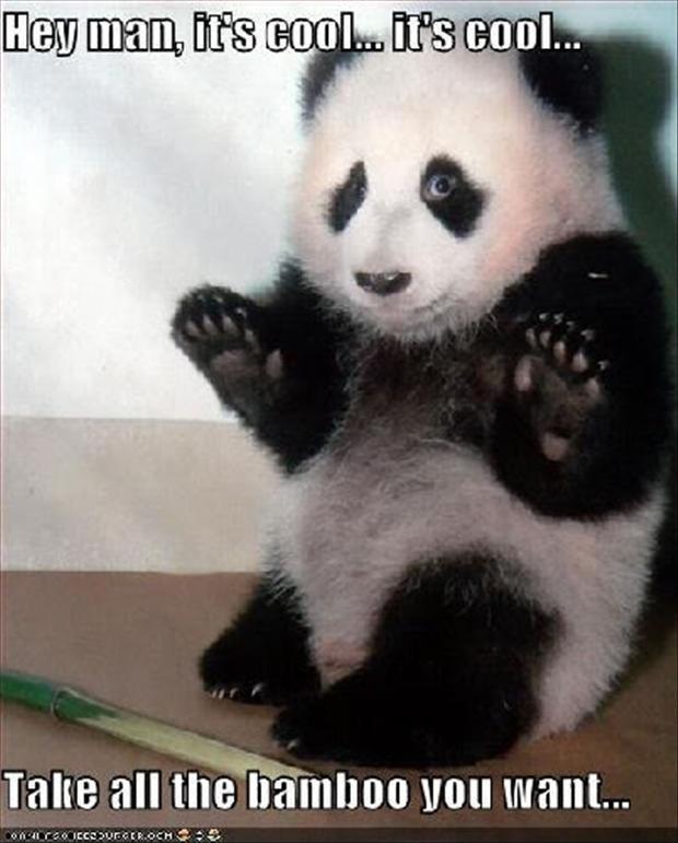 Funny/Cute Animal Pics Funny-animal-pictures-panda-bears