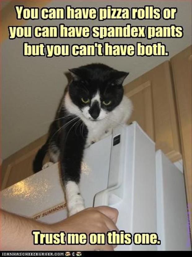 Funny/Cute Animal Pics - Page 5 Funny-animal-pictures-1