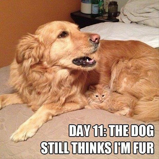 Funny/Cute Animal Pics - Page 2 Funny-cat-and-dog1