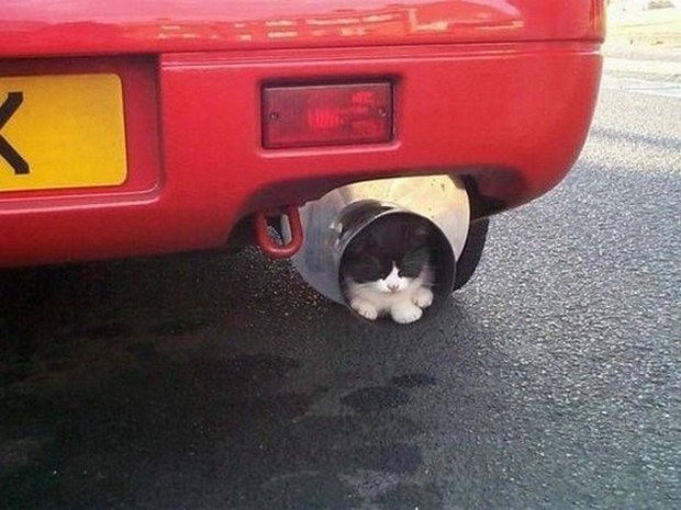 Debaffle Animal-Ninjas-Cat-exhaust-pipe