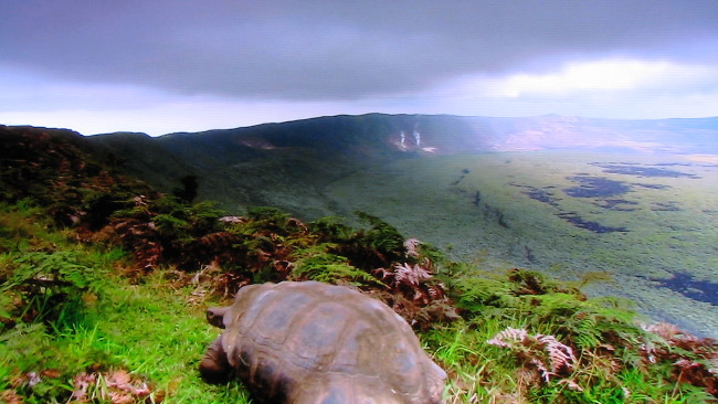 Galapagos adaları./2007/.HDrip./TRDublaj goruntu mükemmel/belgeselde süper IMG_4452