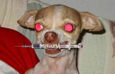 Rencontre avec un chien ... agressif... Chien_bizarre