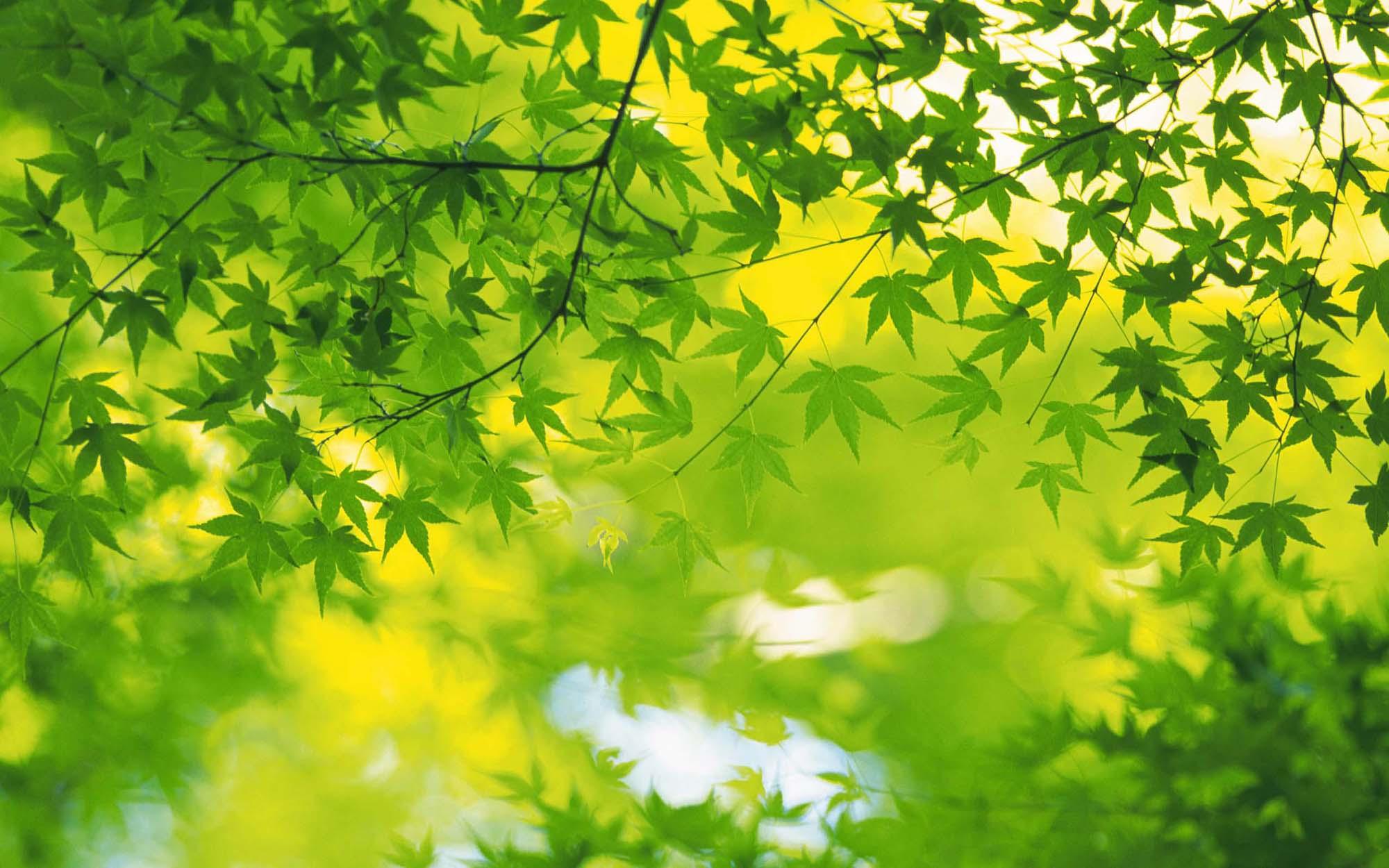Volim zeleno - Page 33 Zeleno