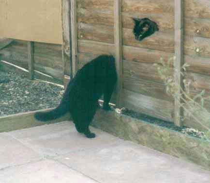 Nos amis, les animaux(quand ils font semblant d'être bête) - Page 2 Accueil_pixou59670_94872562