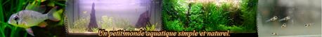 Un petit monde aquatique simple et naturel.
