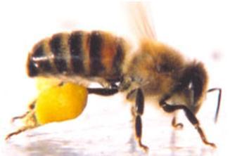 الاعجاز فى النحل Nahel