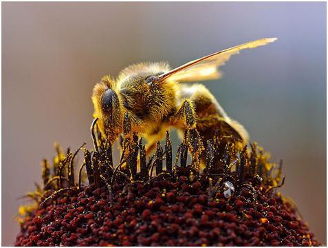 الاعجاز فى النحل Nahel_2